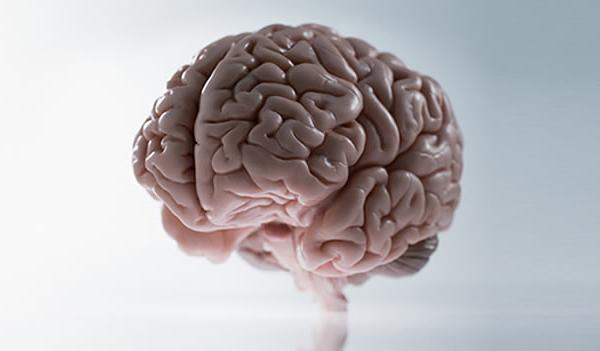 brain-cerebro-tronco-del-encefalo-encefalico