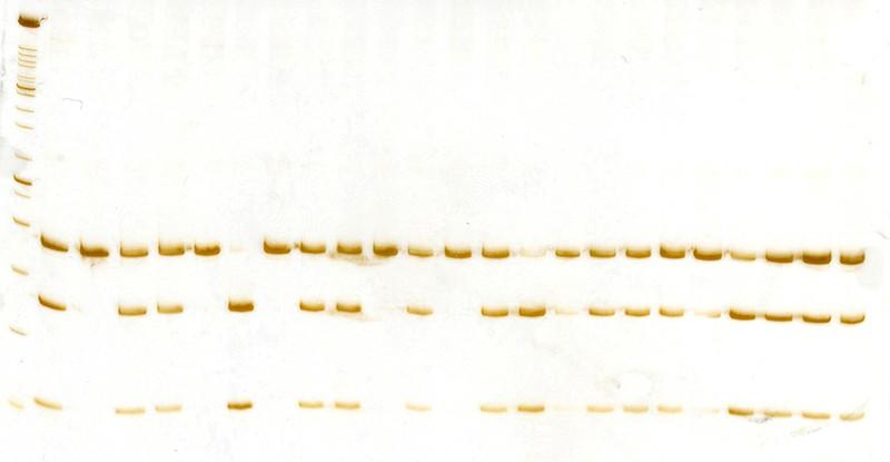 3 poliacrilamida cyp17