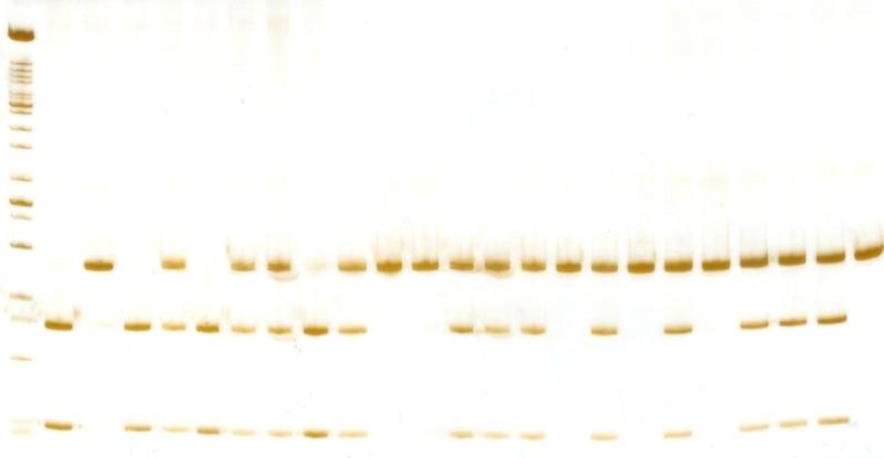 6 poliacrilamida cyp17